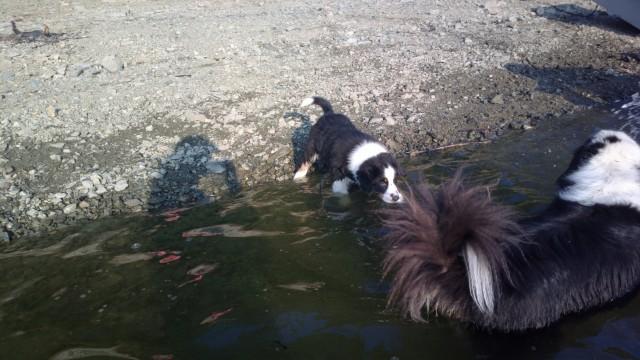 Šajn ukazuje Assimu vodu