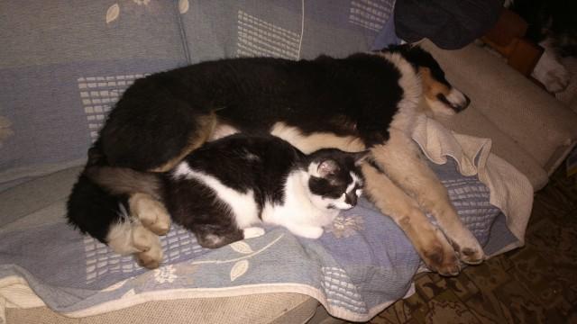 s kočkama je kamarád