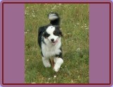 štěně - 6měsíců