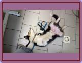 odpočívá i u veterináře :)
