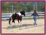 hobíky horsemanship