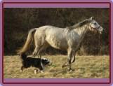 """2x """"Š""""  :-)  Shine(pes) a Shakira(kůň)"""