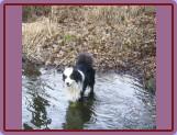 miluje vodu