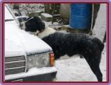 Agi pomáhá očistit sníh z auta