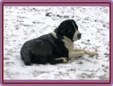 Zima 1/2009