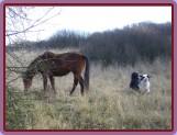na vyjíždce s koňmi