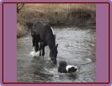 Šajn miluje vodu a koně