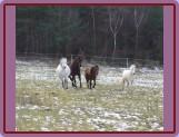 začlenění nového člena do stáda (Ponka, Nik, Shakira a Paloma se jdou podívat)