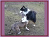 hrátky se psy